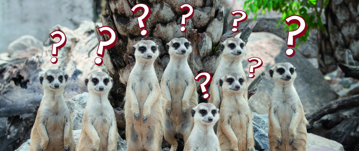 Group of meerkats with question marks above their heads.